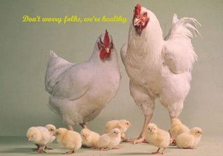healthy chicken family